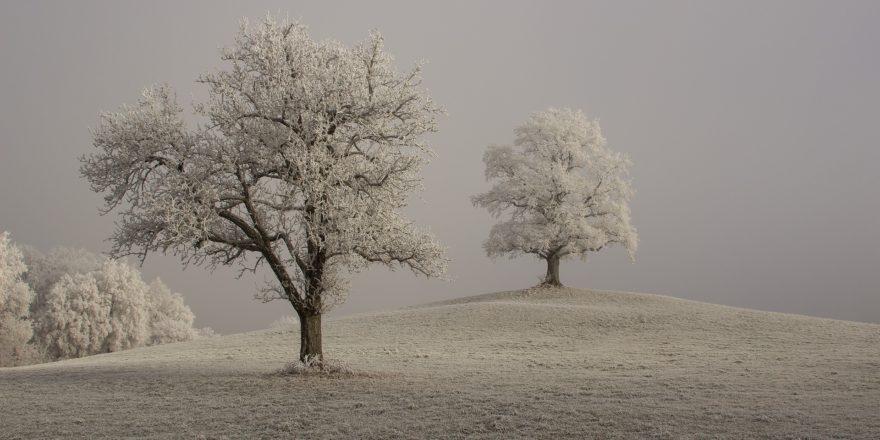 Rejs væk fra kulden