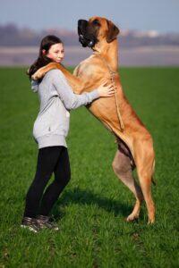 Gps til hund