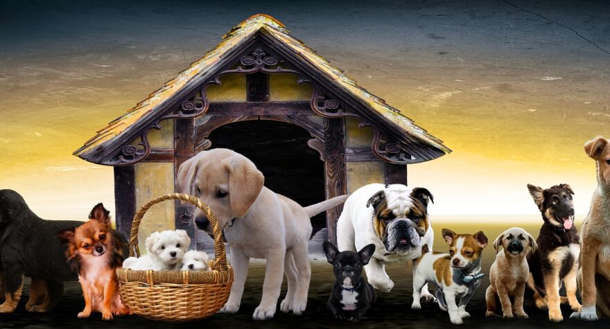 Servicehunde