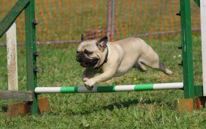 hund aktivitet